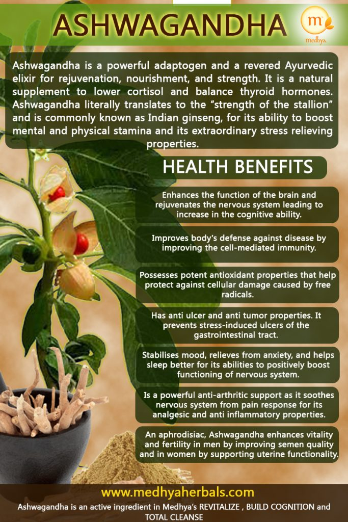 """Ashwagandha is a powerful adaptogen and a revered Ayurvedic elixir for rejuvenation, nourishment, and strength. It is a natural supplement to lower cortisol and balance thyroid hormones. Ashwagandha literally translates to the """"strength of the stallion"""" and is commonly known as Indian ginseng, for its ability to boost mental and physical stamina and its extraordinary stress relieving properties."""